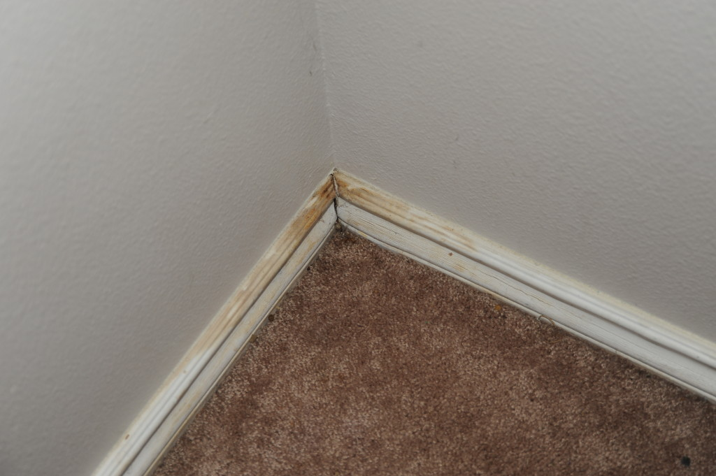 Old and discolored baseboards.  Compared a 2012 photo to this one.  Virtually identical.