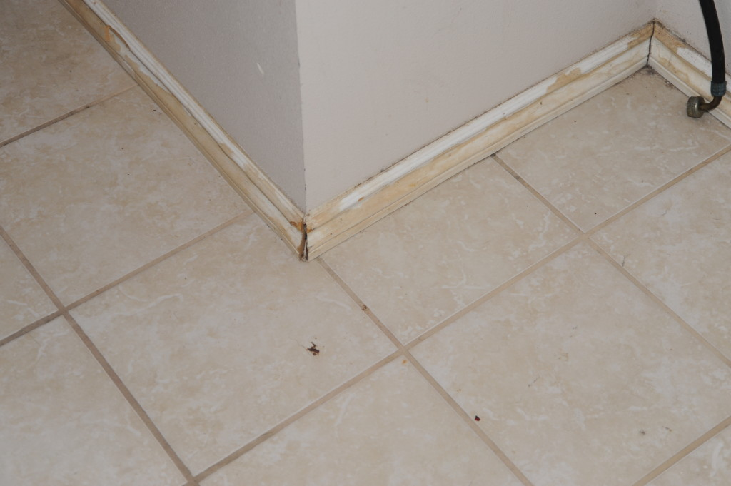 Laundry room baseboards.  Floor is ok.  Just need to paint in laundry room and replace or paint baseboards.